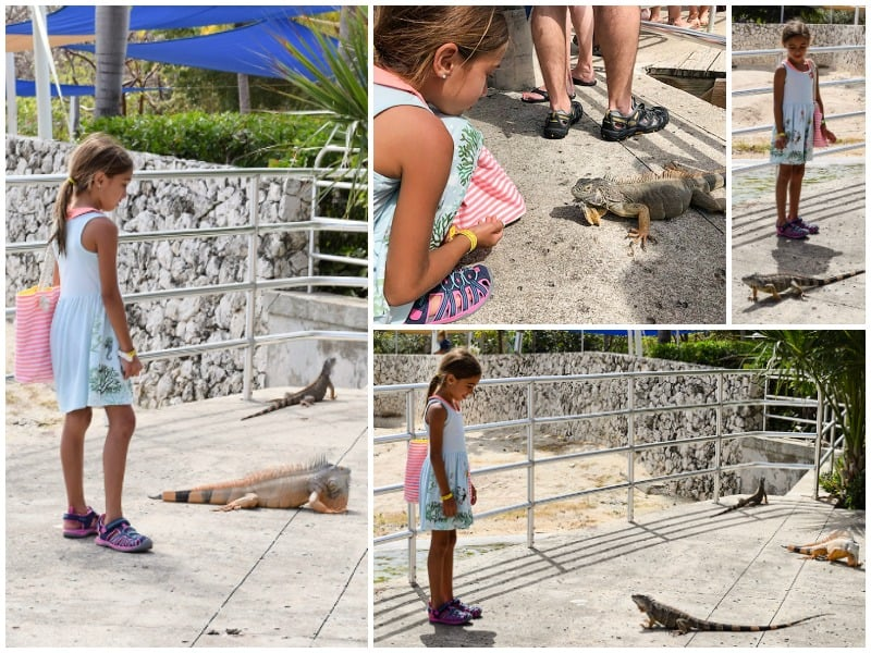 Caribbean cruise, turtle farm, grand cayman island