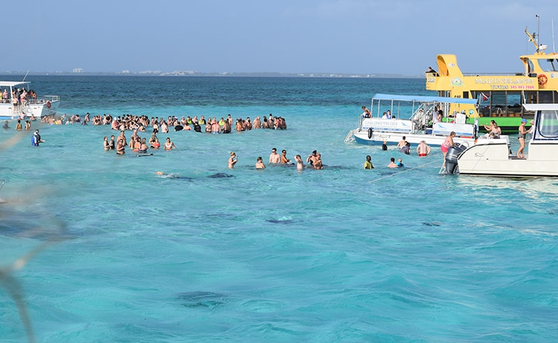 Stingray city in the Grand Cayman Island, Visiting this great excursions on your western Caribbean cruise port.