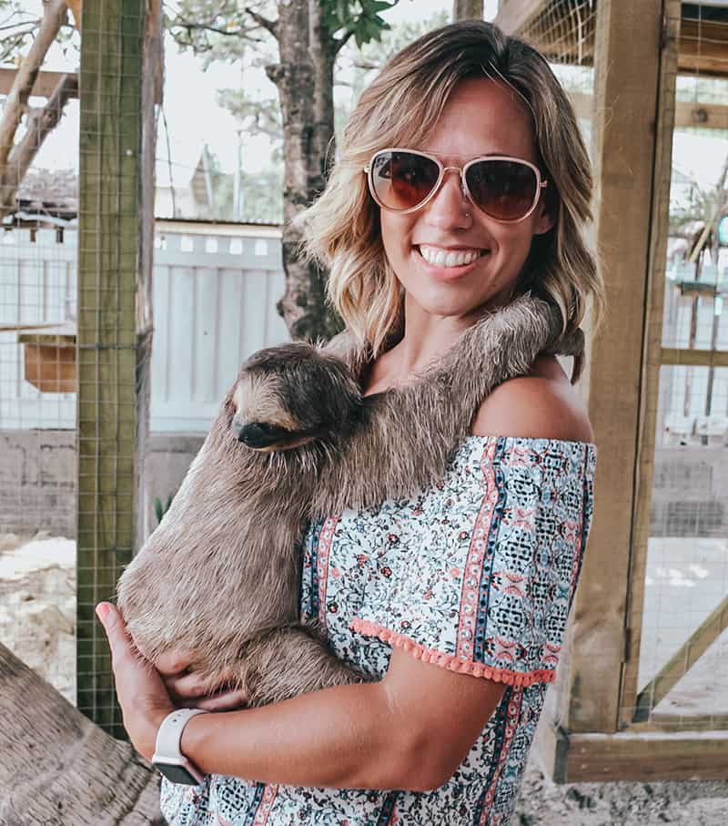 Hold a sloth at Daniel Johnsons Monkey and sloth hang out in roatan Honduras
