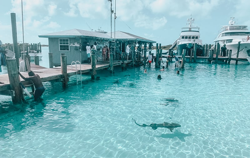 Swimming with nurse sharks in the Bahamas