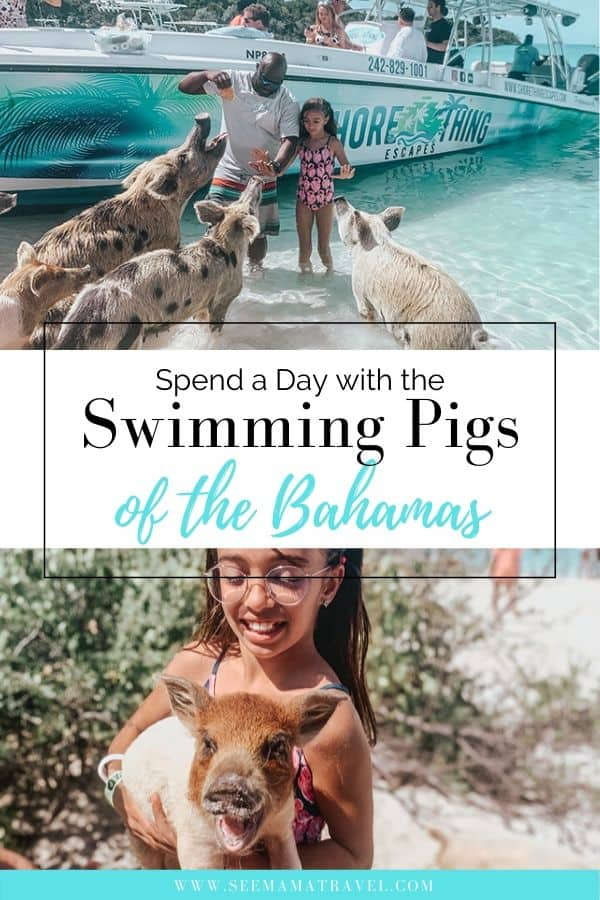 How to See The Famous Swimming Pigs of The Bahamas