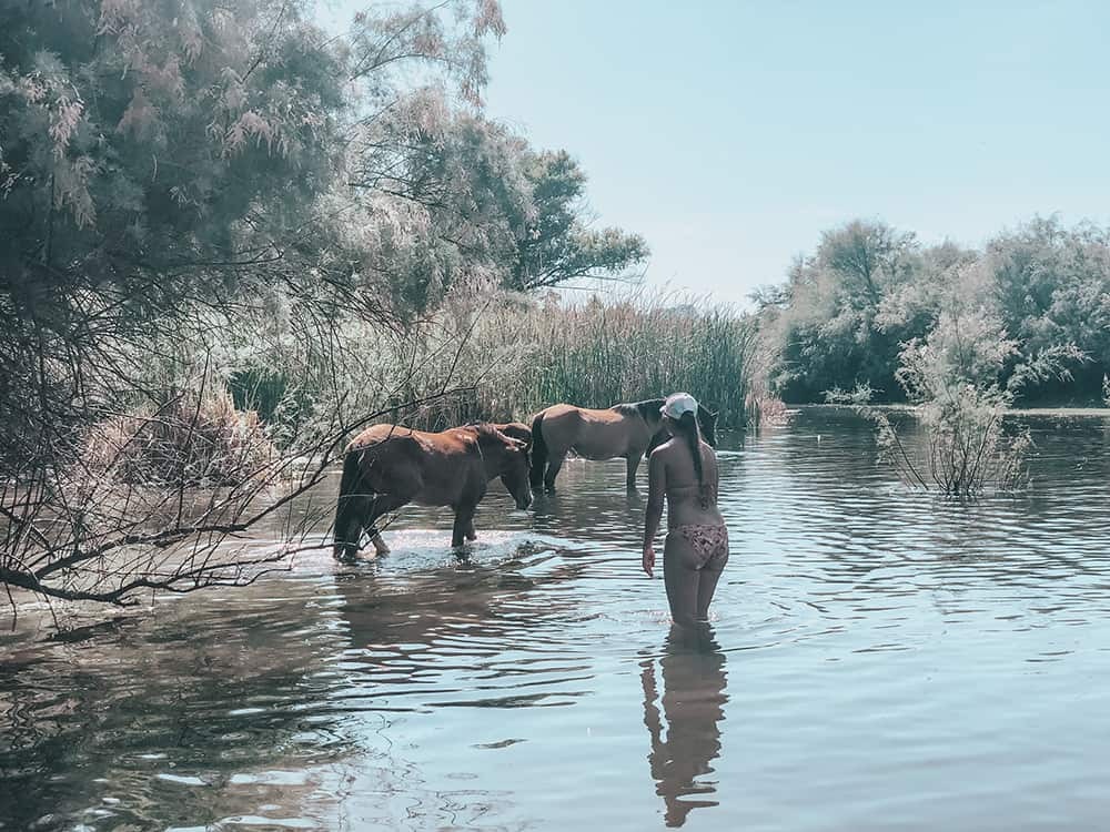 Girl approaching wild horse at the Salt River