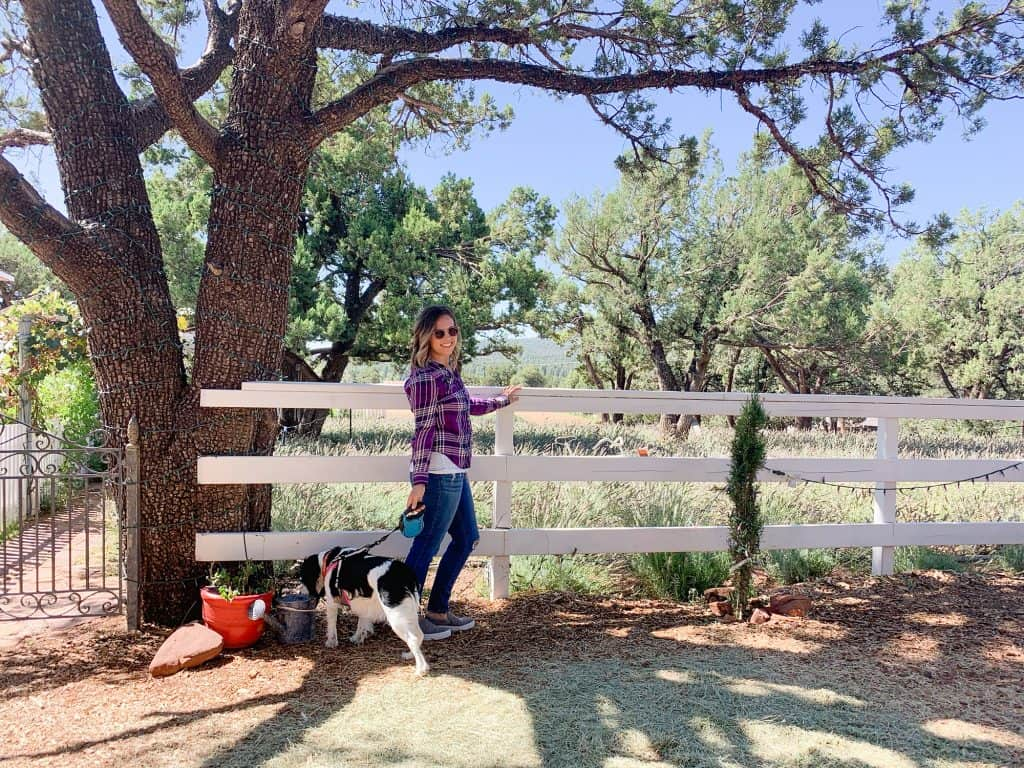 What to do in Pine, Arizona